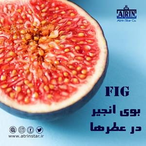 FIG In Perfumes